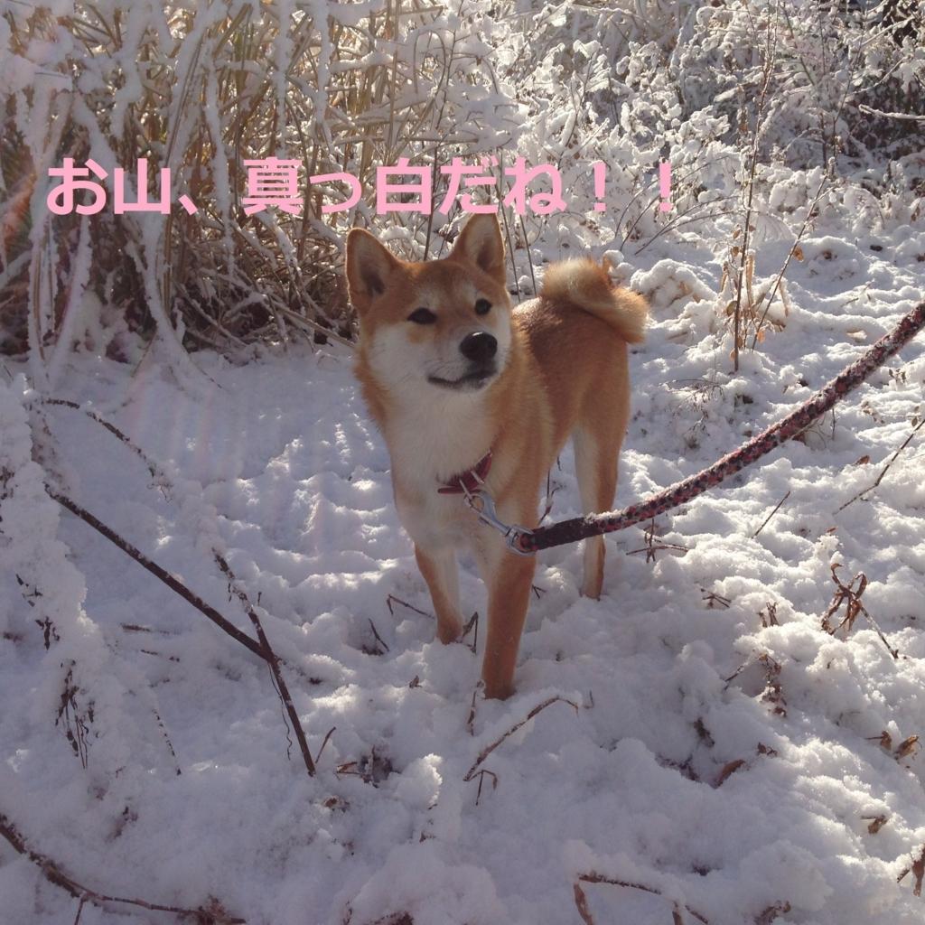 f:id:yatosyouta:20170811023251j:plain