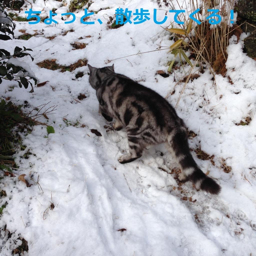 f:id:yatosyouta:20170811023321j:plain