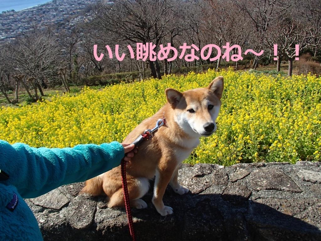 f:id:yatosyouta:20170814131101j:plain