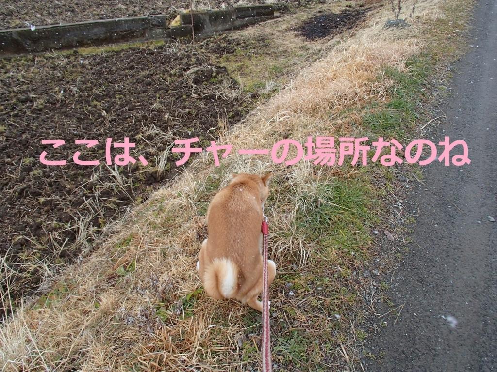 f:id:yatosyouta:20170815131117j:plain