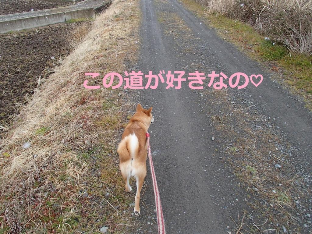 f:id:yatosyouta:20170815131147j:plain