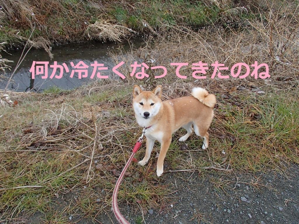 f:id:yatosyouta:20170815131341j:plain