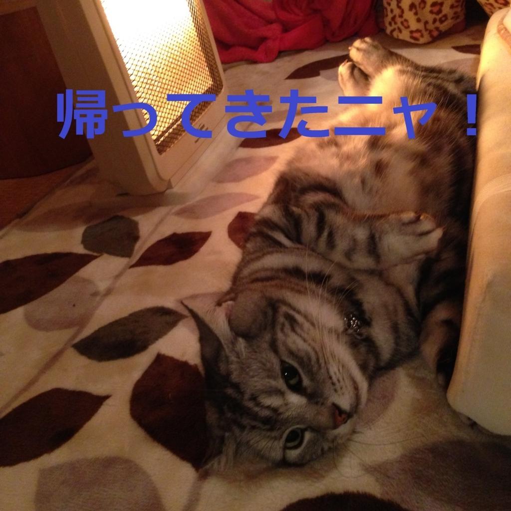 f:id:yatosyouta:20170815131405j:plain