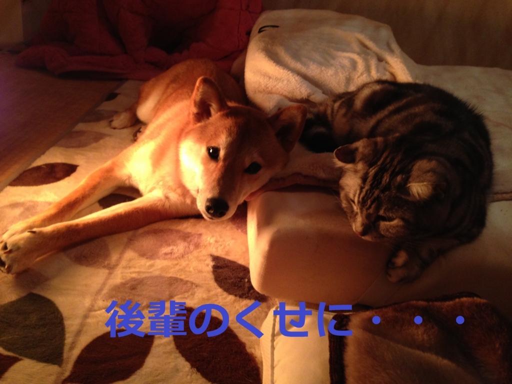 f:id:yatosyouta:20170815131435j:plain