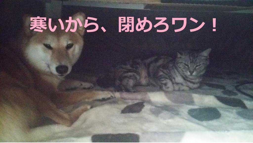 f:id:yatosyouta:20170815201740j:plain