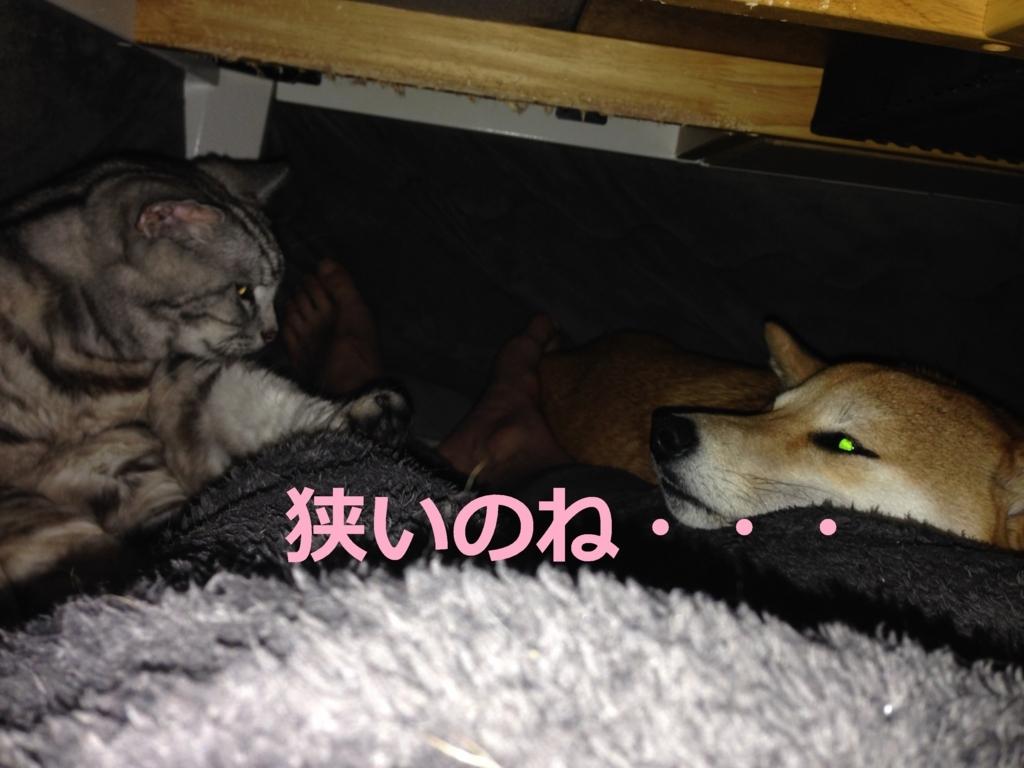 f:id:yatosyouta:20170815201800j:plain