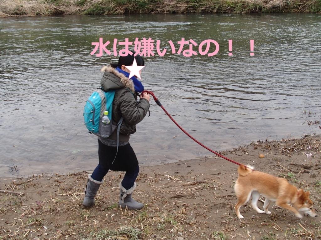 f:id:yatosyouta:20170816163545j:plain