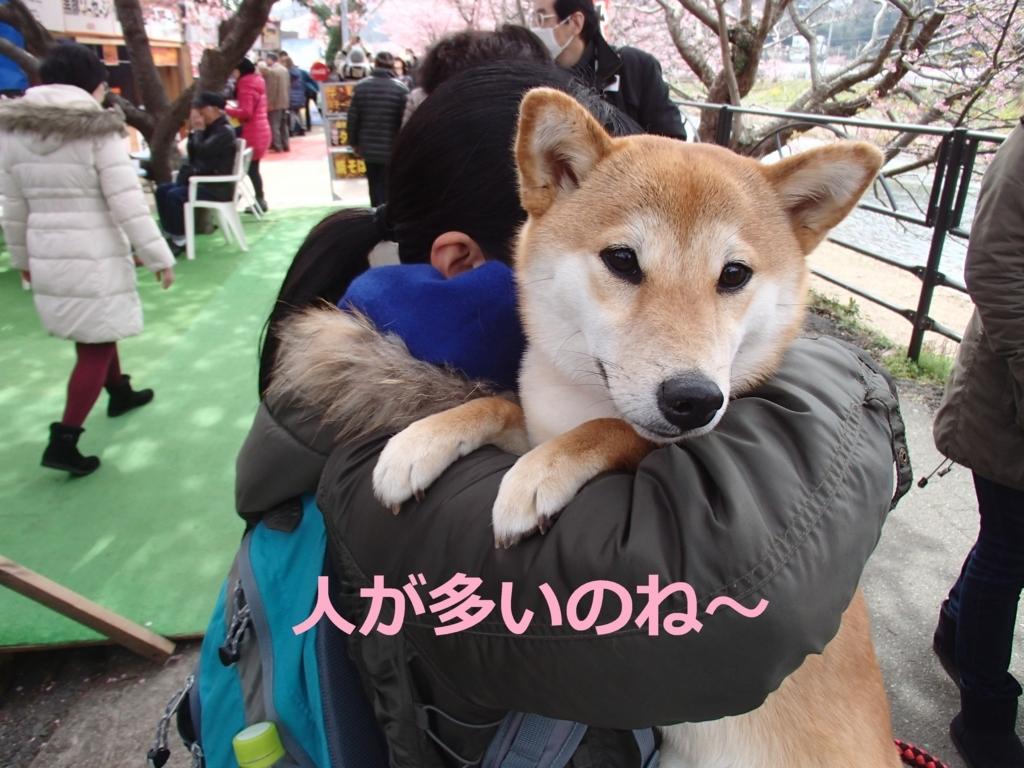 f:id:yatosyouta:20170816163600j:plain