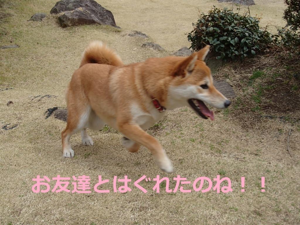 f:id:yatosyouta:20170816201808j:plain