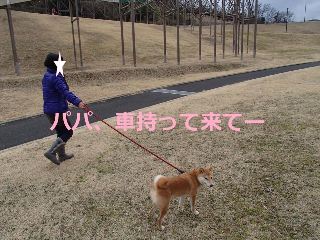 f:id:yatosyouta:20170817165116j:plain