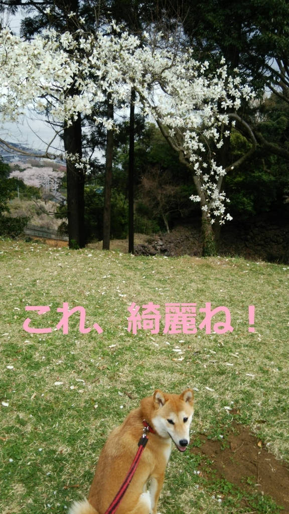 f:id:yatosyouta:20170817165412j:plain