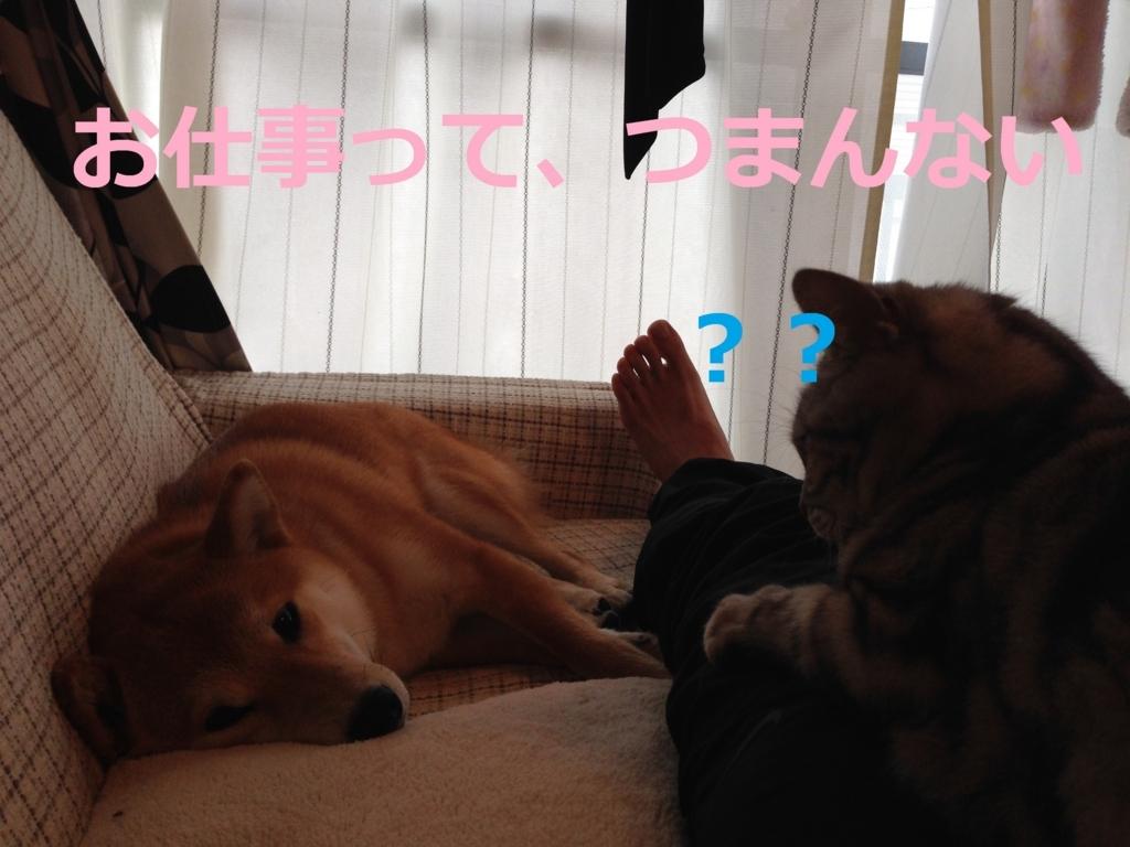 f:id:yatosyouta:20170818181744j:plain
