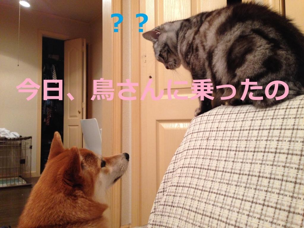 f:id:yatosyouta:20170821120606j:plain
