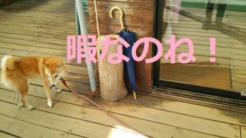 f:id:yatosyouta:20170821142443j:plain