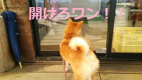 f:id:yatosyouta:20170821142510j:plain