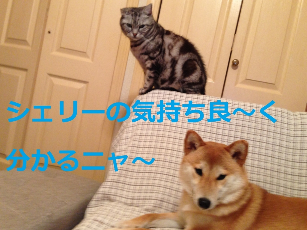 f:id:yatosyouta:20170822181315j:plain