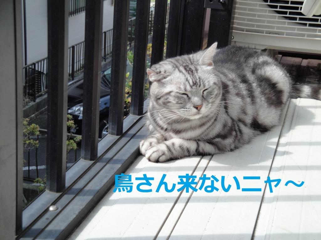 f:id:yatosyouta:20170824113656j:plain