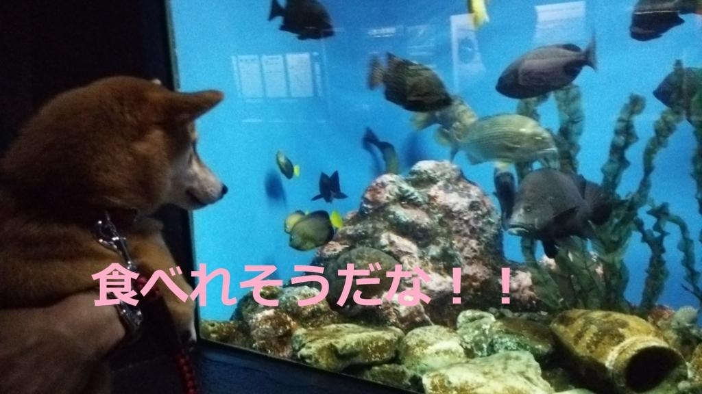 f:id:yatosyouta:20170901121156j:plain
