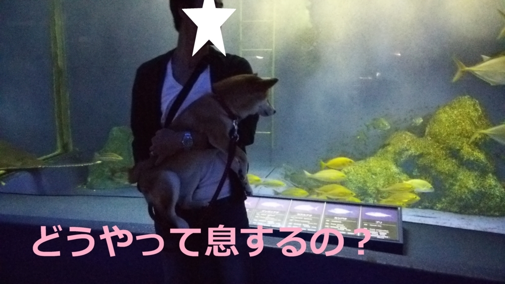 f:id:yatosyouta:20170901121212j:plain