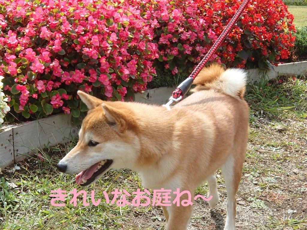 f:id:yatosyouta:20170902125017j:plain