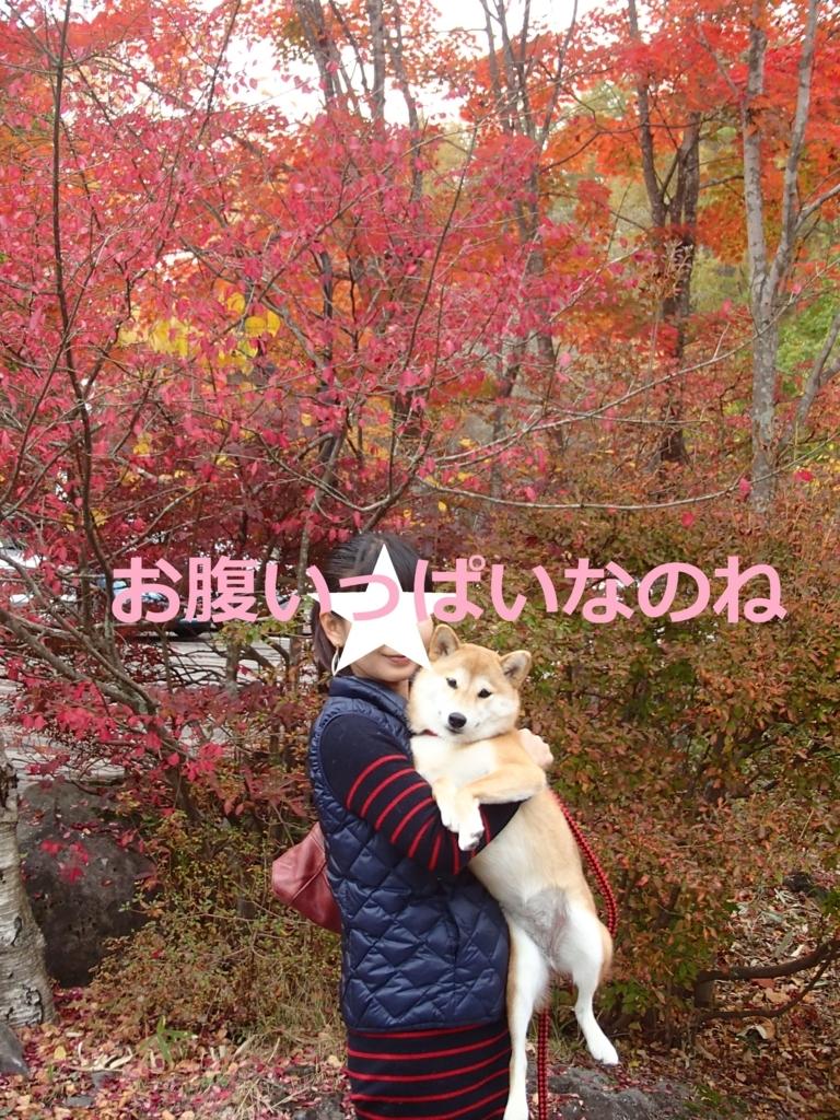 f:id:yatosyouta:20170903155649j:plain