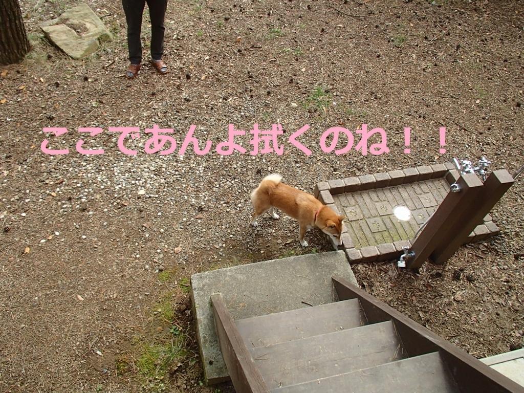 f:id:yatosyouta:20170903160029j:plain