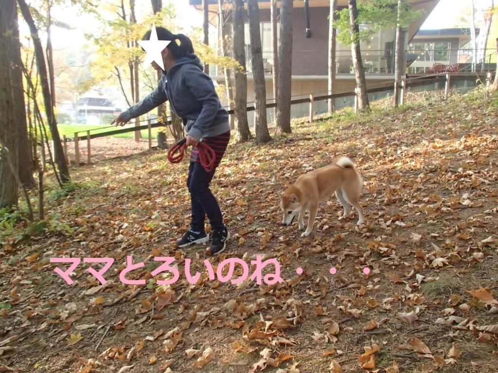 f:id:yatosyouta:20170903160137j:plain