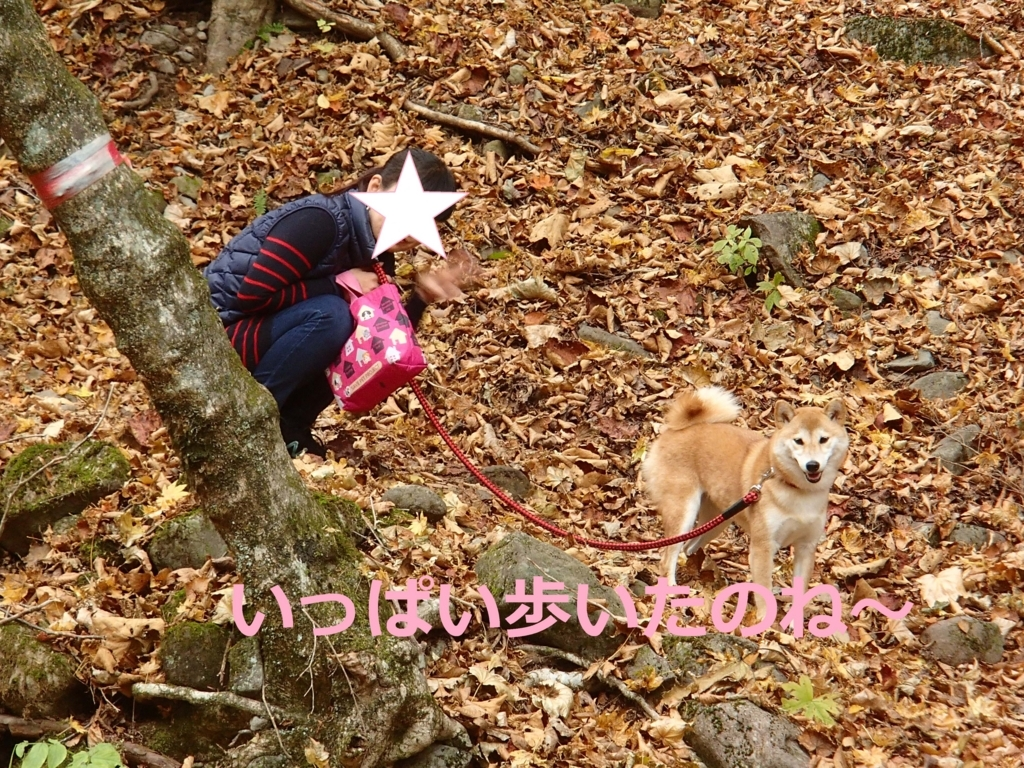 f:id:yatosyouta:20170903160140j:plain