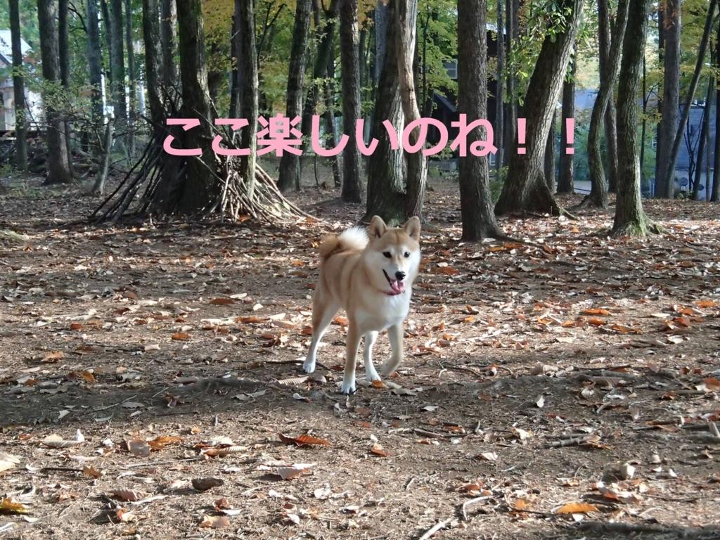 f:id:yatosyouta:20170903171637j:plain