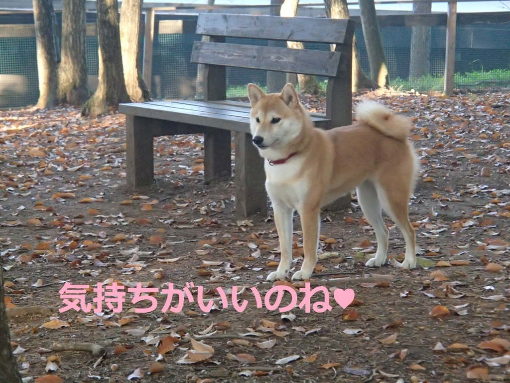 f:id:yatosyouta:20170904145504j:plain