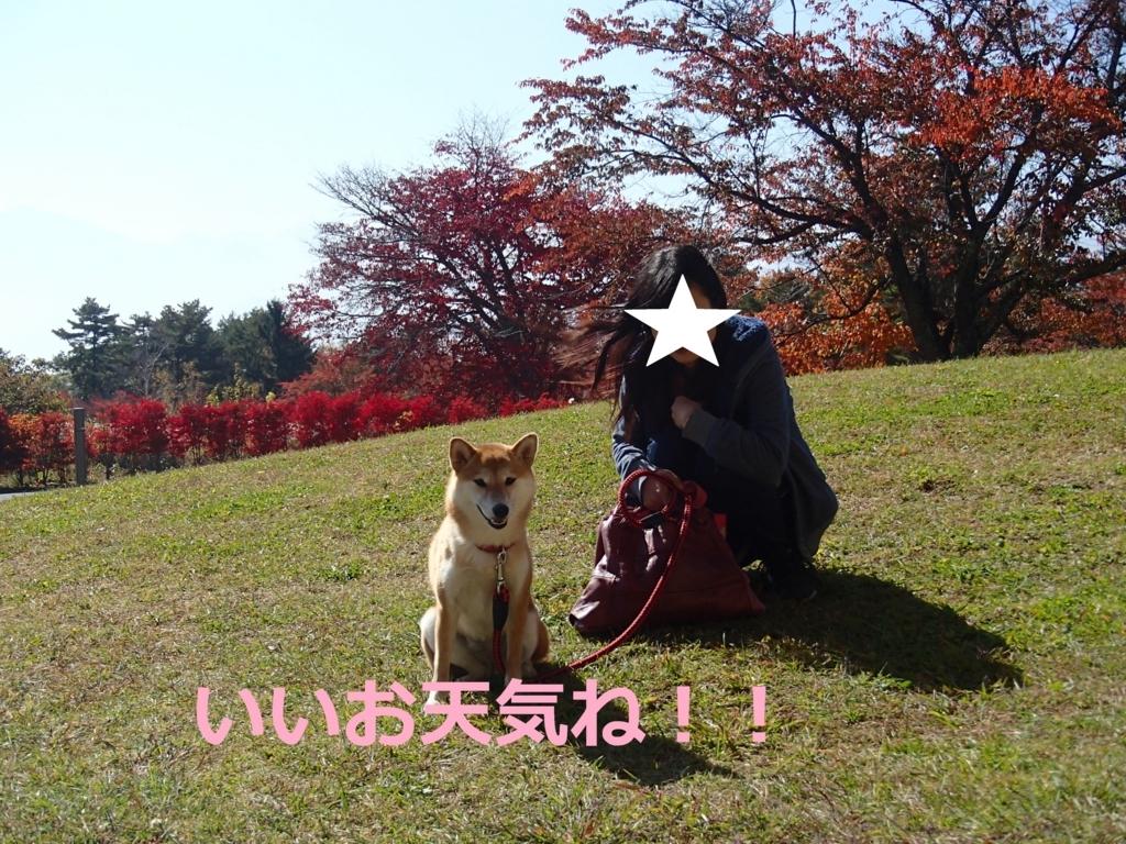f:id:yatosyouta:20170904155812j:plain