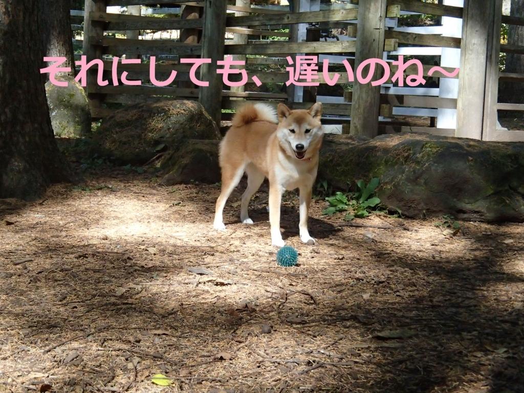 f:id:yatosyouta:20170904193908j:plain