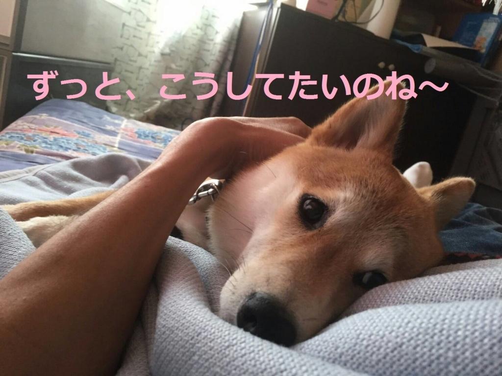 f:id:yatosyouta:20170905115327j:plain