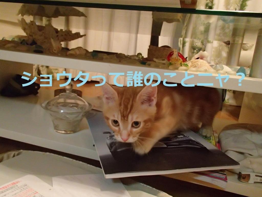 f:id:yatosyouta:20170907130217j:plain