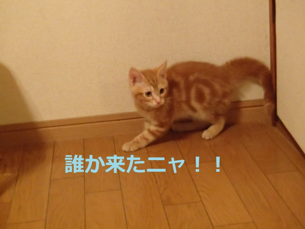 f:id:yatosyouta:20170907130238j:plain