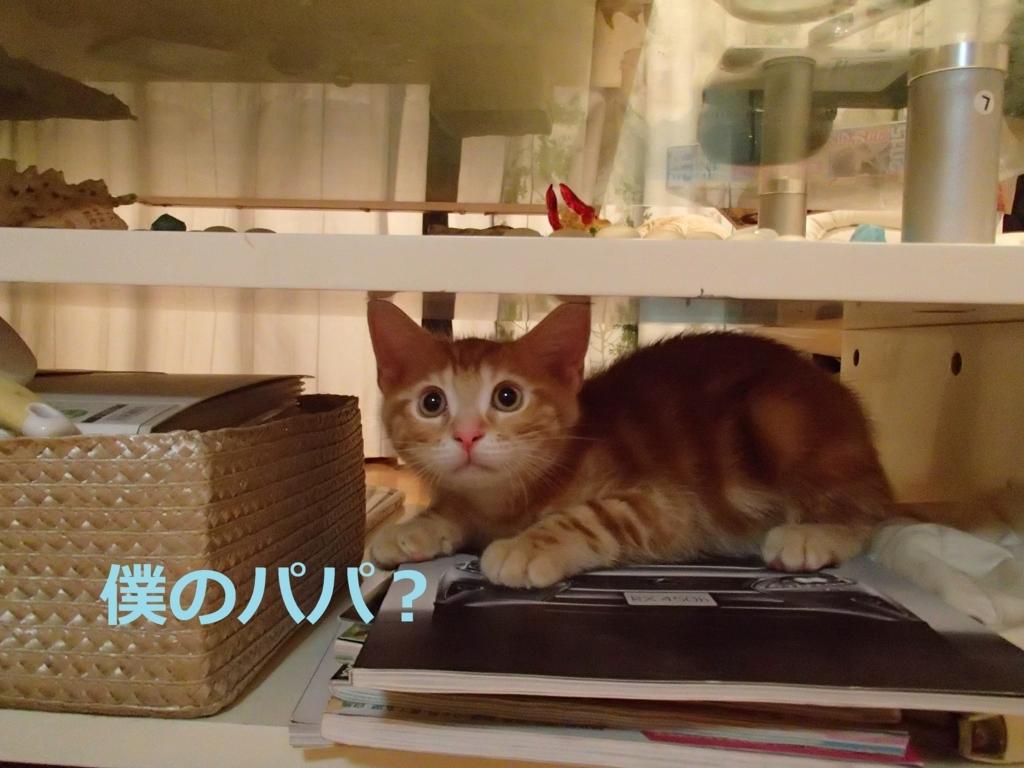 f:id:yatosyouta:20170907130302j:plain