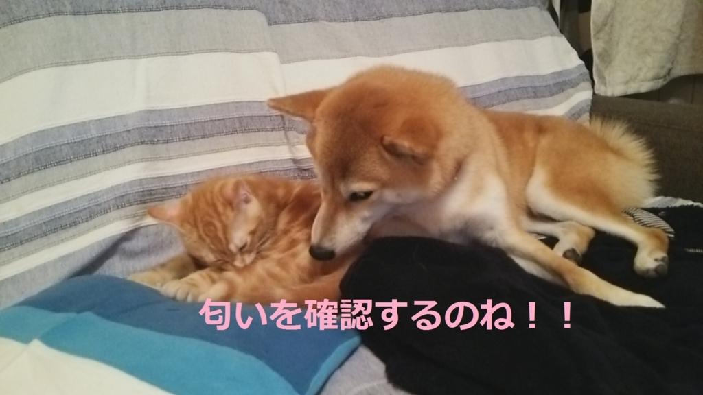f:id:yatosyouta:20170908143855j:plain