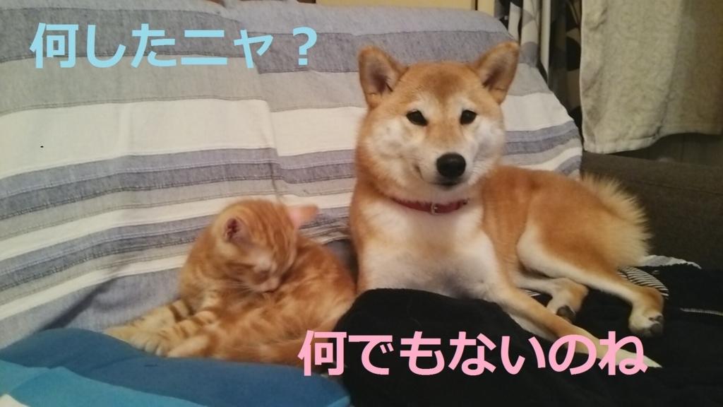f:id:yatosyouta:20170908143904j:plain