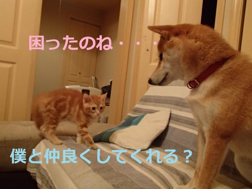 f:id:yatosyouta:20170908144036j:plain