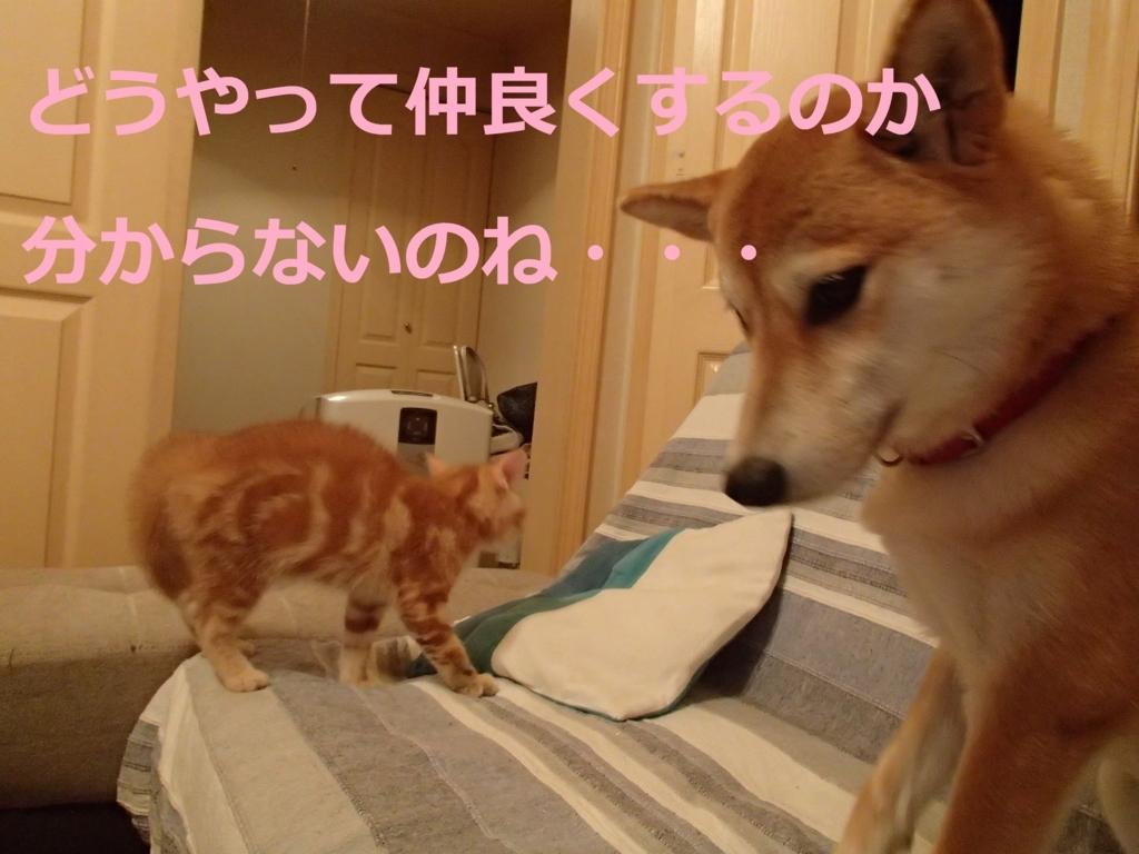 f:id:yatosyouta:20170908144128j:plain