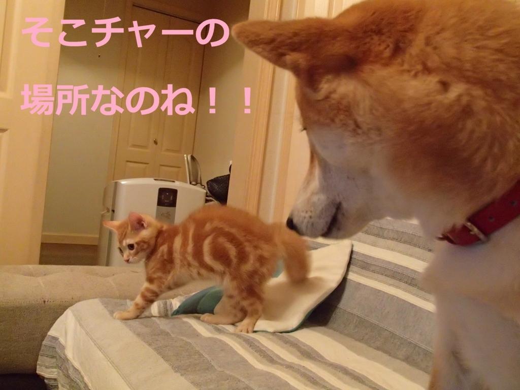 f:id:yatosyouta:20170908144145j:plain