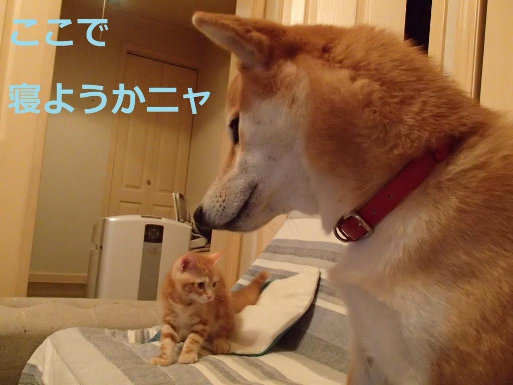 f:id:yatosyouta:20170908144153j:plain