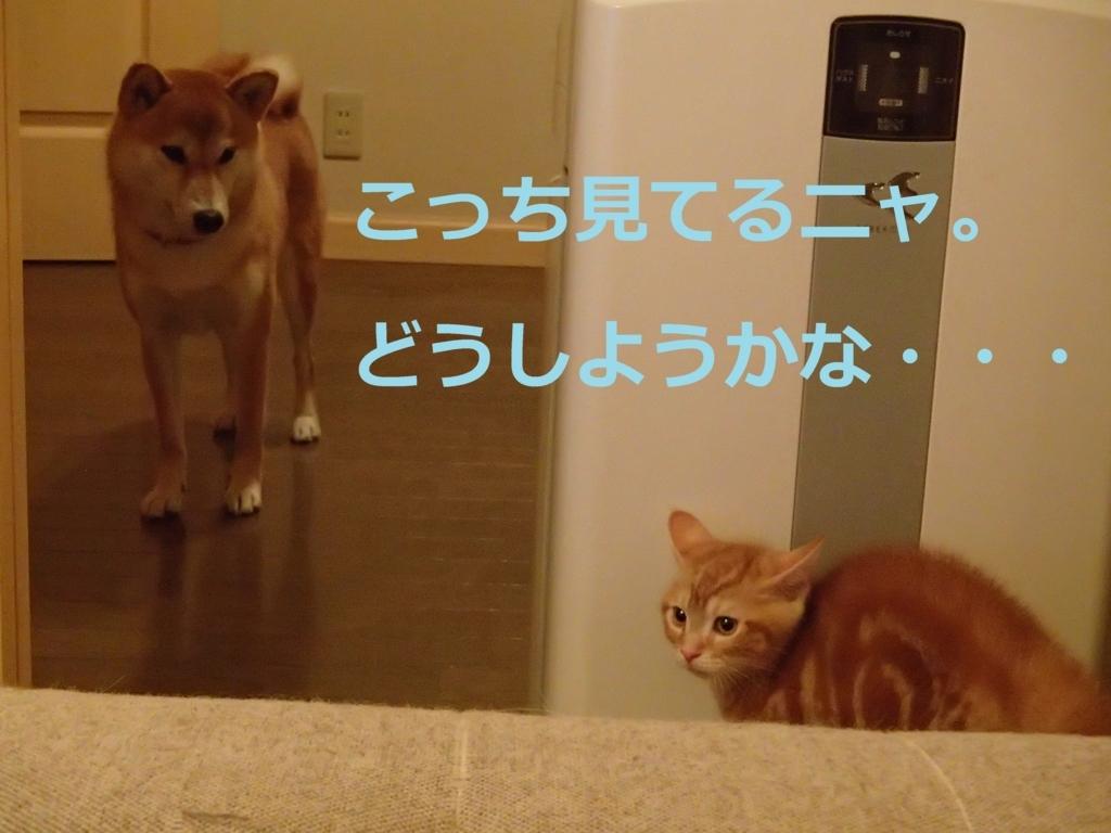 f:id:yatosyouta:20170908144226j:plain