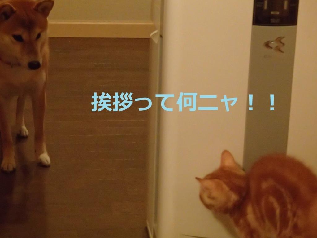 f:id:yatosyouta:20170908144321j:plain
