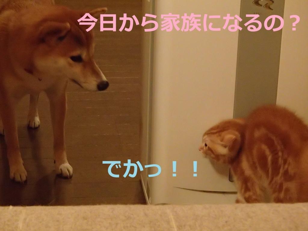 f:id:yatosyouta:20170908144426j:plain