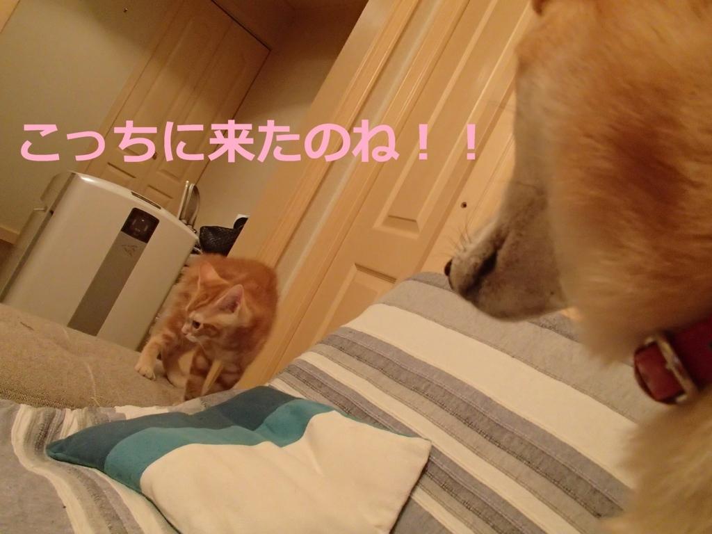 f:id:yatosyouta:20170908151018j:plain