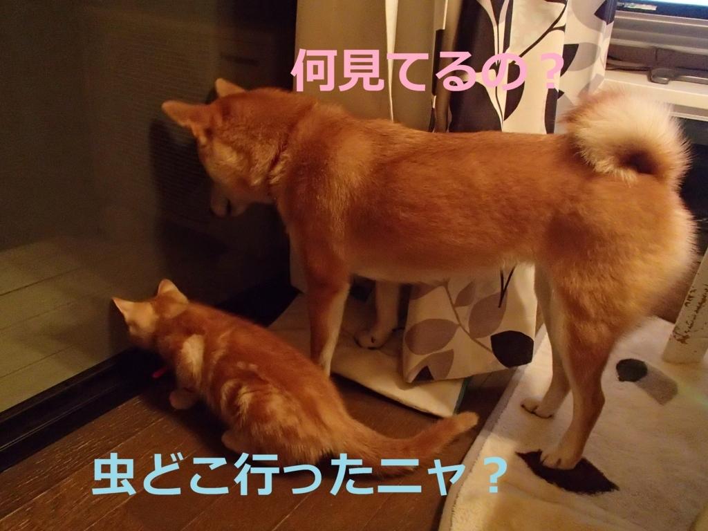 f:id:yatosyouta:20170910172822j:plain