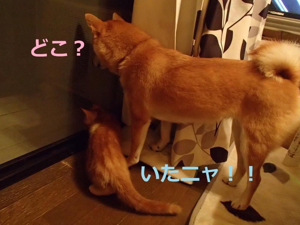 f:id:yatosyouta:20170910172851j:plain