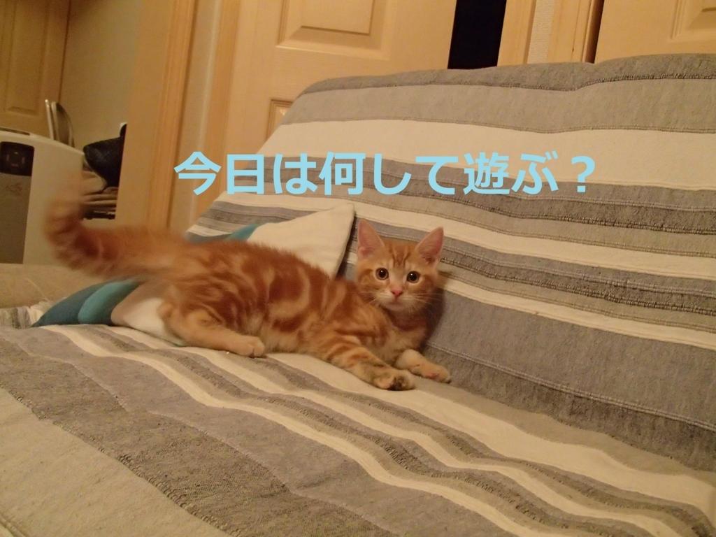 f:id:yatosyouta:20170910173134j:plain
