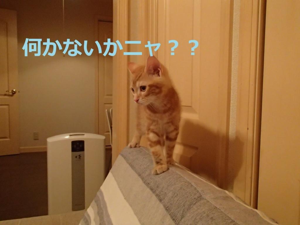 f:id:yatosyouta:20170910173212j:plain